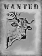 wanted françois desouche